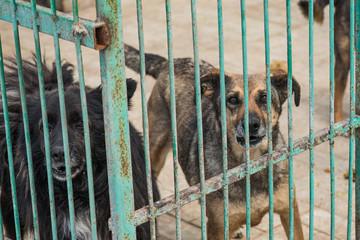 Fototapeta Many stray dogs behind bars of a dog shelter.