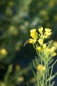 Bee perched on the yellow leaves of a pretty flower with field in the background