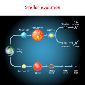 Stellar evolution. Life cycle of a star.