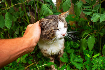 Photo of cute cat on green background, photo of cat with hand