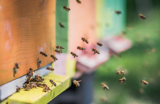 Bees flying entering honeycomb bee hive
