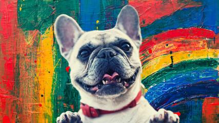 Foto auf Gartenposter Französisch bulldog bulldog
