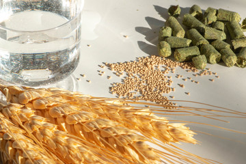 Hop pellets, barley sheaf, yeast and water. The main building blocks and essential fundamental ingredients of beer.