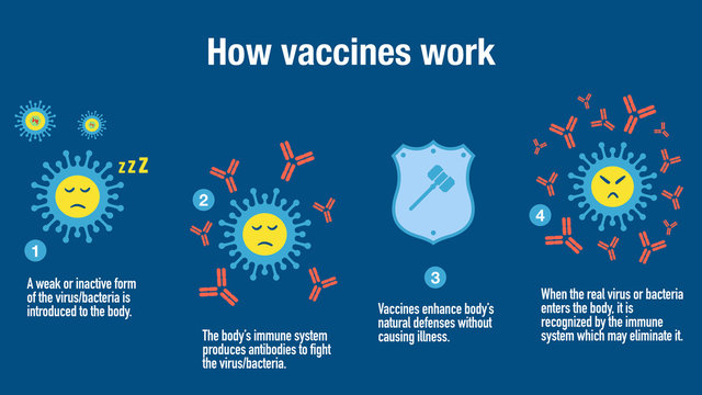 How vaccines work to produce antibodies and stimulate the immune system defenses