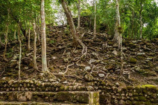 Detalle de ruinas y árboles en Zona Arqueológica de Calakmul, Campeche, México.