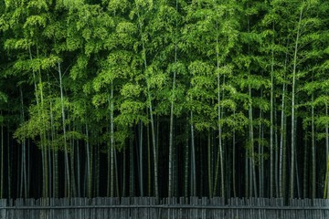 Scenic View Of Bamboo Trees Growing In Forest