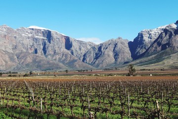 Scenic View Of Vineyard Against Mountains