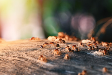 Colony Of Termite, Termites eat wood ,termites that come out to the surface after the rain fell. termite colonies mostly live below the surface of the land