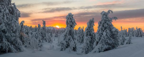 Fototapeten Grau Trees On Snow Covered Landscape Against Sky