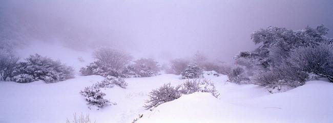Foto auf Gartenposter Flieder Trees On Snow Covered Landscape