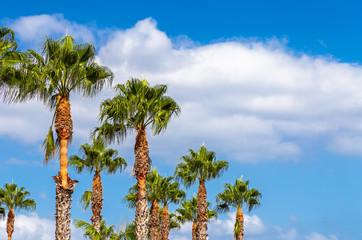 Palme vor blauem Himmel auf der Insel Madeira