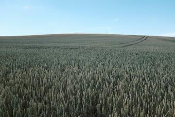 Fototapeten Khaki Agricultural Landscape Against Clear Sky