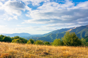 wonderful autumn landscape on a sunny evening. trees and weathered grass on the hills. rural valley and mountain range in the distance beneath a blue sky with clouds
