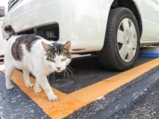 Fotomurales - Portrait Of Cat Walking In Parking Lot