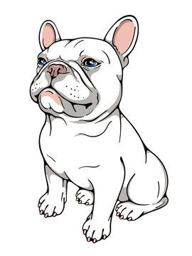 Cute cartoon french bulldog. Vector illustration