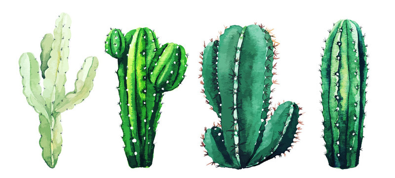 Watercolor set of cactus plants and succulents