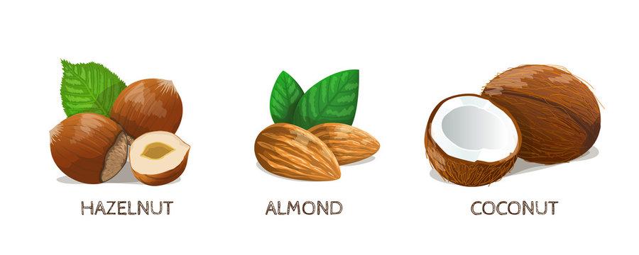 Nuts Icon Set: Hazelnut, Almond, Coconut. Vector Illustration.