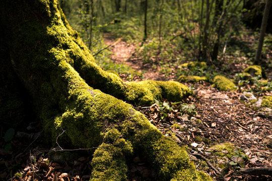 Leuchtendes Wurzelwerk im Märchenwald