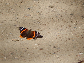 Chilling butterfly on sand as background with copy space