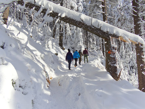 Group of people walking on a hiking path through snow covered forest in Czech Republic