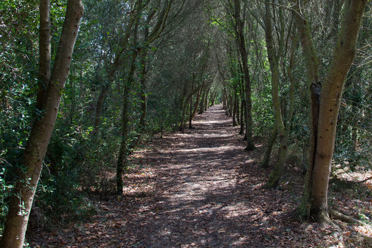 Walkway entering into the forest