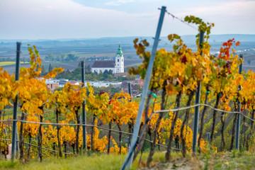 vineyard near Unterretzbach in the Weinviertel region, Lower Austria, Austria