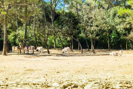 Endangered animlas at conservation zoo, Montpellier, France