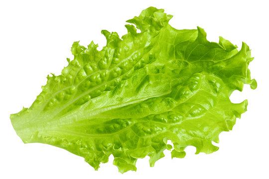 Salad leaf, lettuce, isolated on white background, clipping path, full depth of field