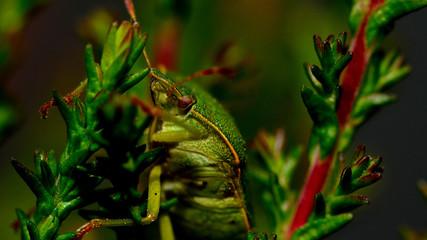 Foto auf Leinwand Chamaleon robak