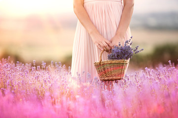 Beautiful teen hipster holding a busket with lavender flowers in a provence lavender field t sunset rays.