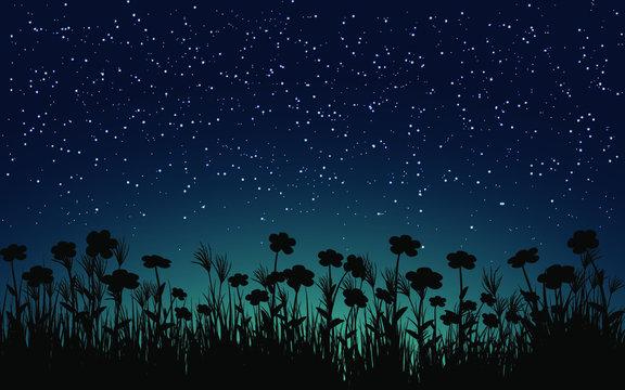 grass in the night
