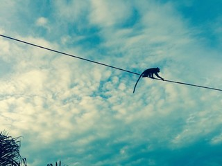 Monkey On Power Line Against Sky