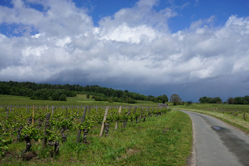 country road in the vineyard of the Loire valley, France on a stormy day