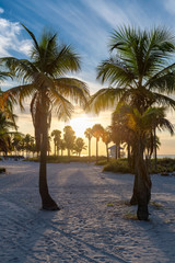 Wall Mural - Palm trees at sunrise on Miami Beach, Florida.
