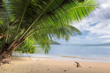 Wall Mural - Palms leafs on exotic tropical beach. Summer vacation and tropical beach concept.