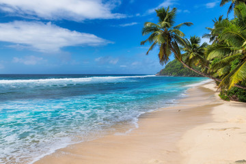 Wall Mural - Tropical white sand beach with coco palms and the turquoise sea on Caribbean island. Summer vacation and tropical beach concept.