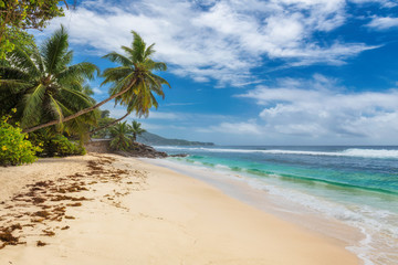Wall Mural - Tropical beach, coconut palm trees and turquoise ocean in paradise island. Summer vacation and tropical beach concept.