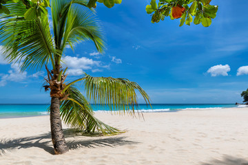 Wall Mural - Sunny beach with white sand, coconut palm trees and turquoise ocean in paradise island. Summer vacation and tropical beach concept.