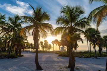 Wall Mural - Palm trees on Miami Beach at sunrise, Florida.