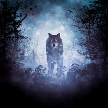 Wolf in a dark mysterious foggy forest,3d rendering