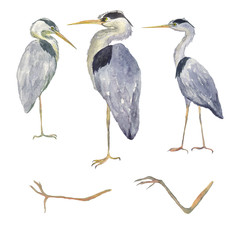 Watercolor set heron birds isolated on white background. Hand drawing illustration of Grey heron. Bird and legs. Perfect for cards, print, sticker, greeting card.