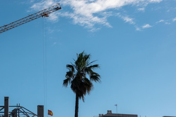 Wall Murals Palm tree Boom tower crane palm and the sky