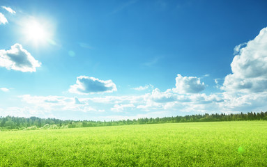 Keuken foto achterwand Lime groen field of spring grass and perfect sky