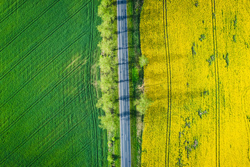 Top view of yellow and green rape fields, Poland