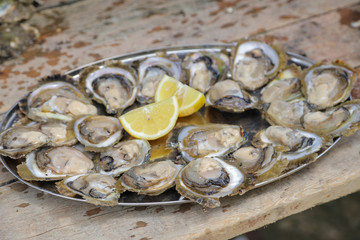 A plate of fresh oysters is pictured on a table in Mali Ston
