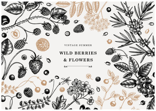 Wild berries vintage design in color. Hand drawn berry and flowers illustrations - strawberry, cranberry, currant,  bilberry, raspberry, blueberry hand drawings. Vintage botanical summer frame.