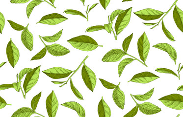 Seamless pattern with hand drawn tea leaves and branches