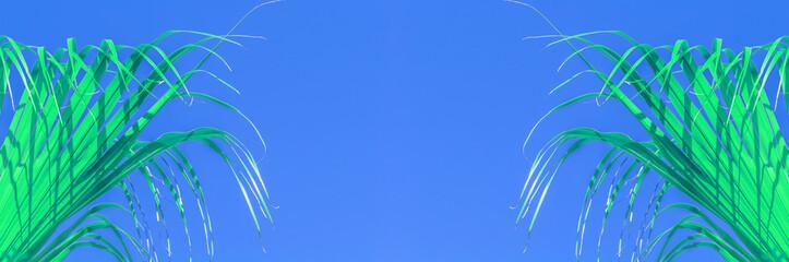 Photo sur cadre textile Palmier Palmes vertes sur fond bleu