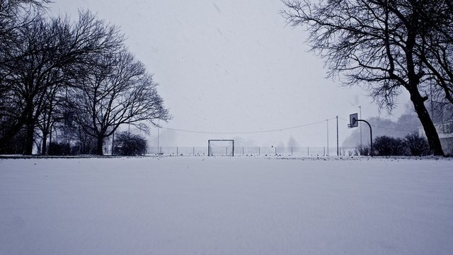Bare Trees By Basketball Court On Snow Covered Landscape