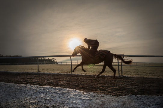 A racehorse in training on Newmarket gallops on a cold morning in winter.